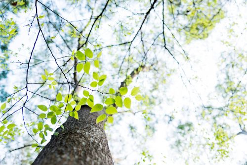 tree-sky-green-leaves-forest-nature-jpg